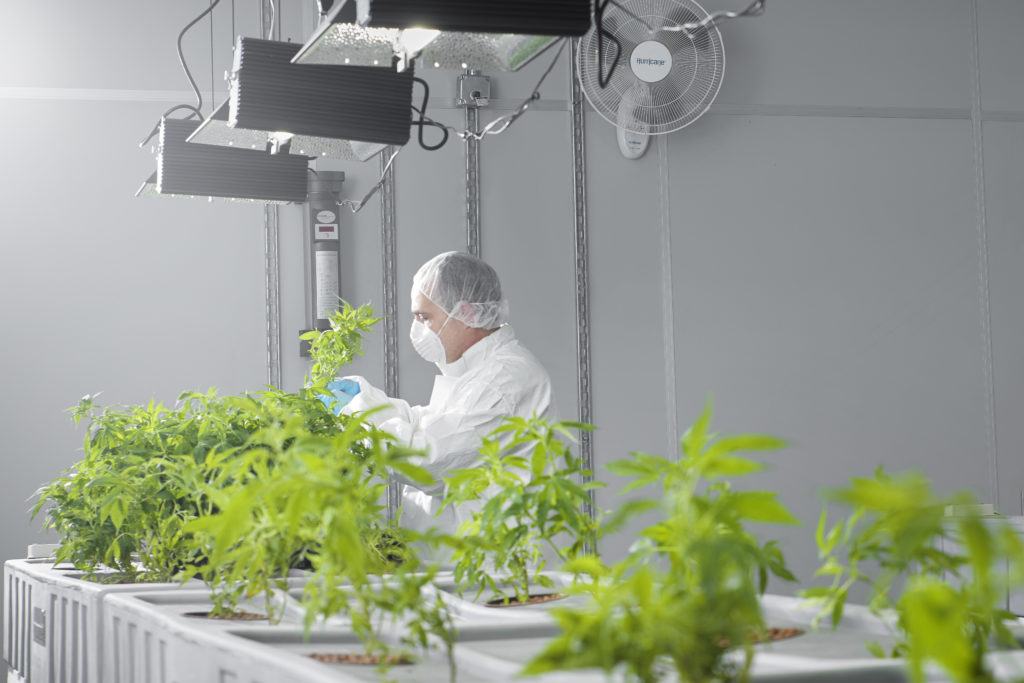 Man With Cannabis Plants.